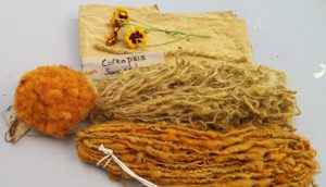 Sheep's fleece and cotton naturally dyed yellow and orange shades with Coreopsis flowers