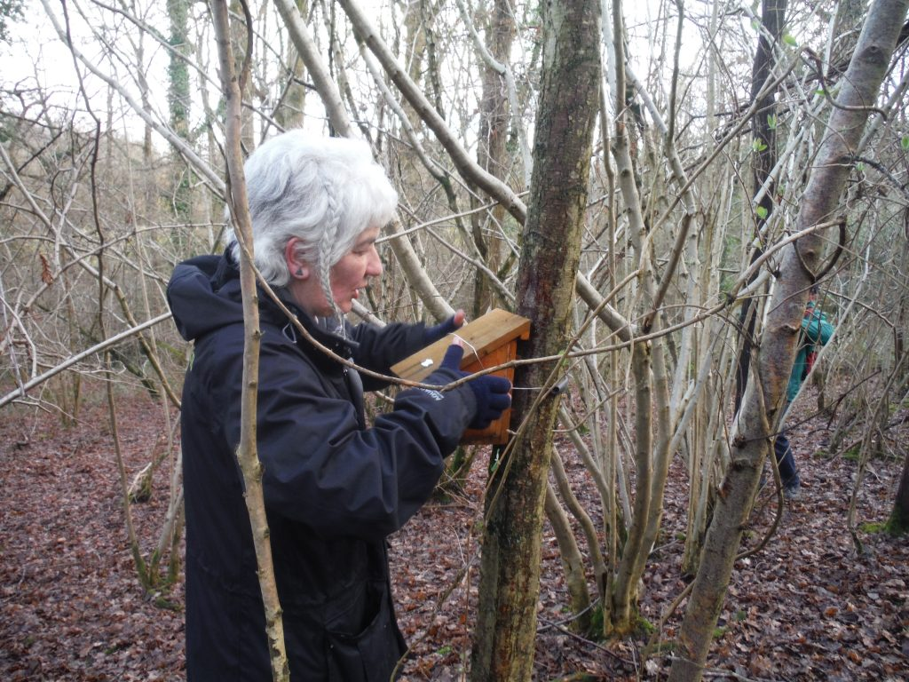 Our Countryside Ranger Trudie inspecting the nesting boxes