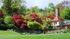 Maples from the Main Lawn