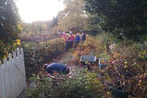 2013 Cutting down the hedge