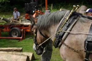 William Wallace & Working Horse Trust
