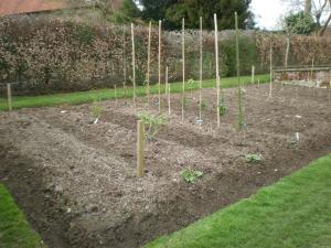 2009 Fruit bed planted