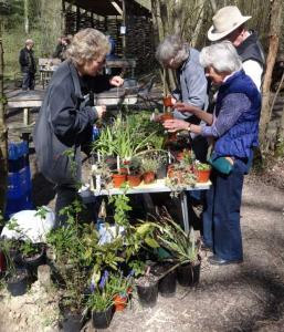 Elaine running the Plant Stall